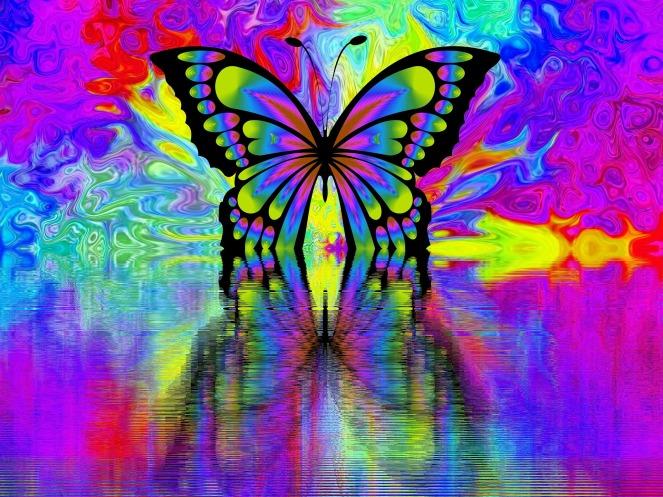 butterfly-2071330_1920